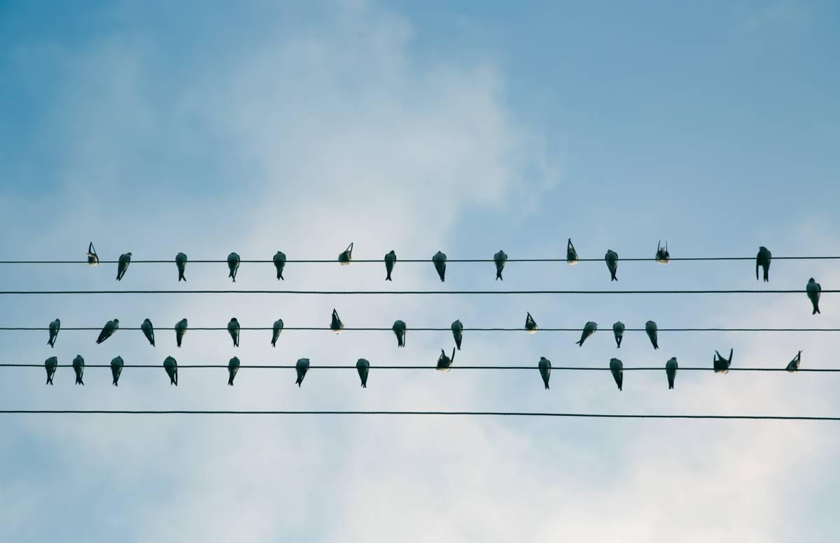 work life balance birds on wire